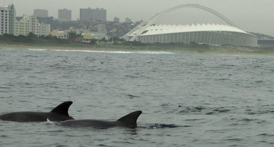 Dolphins and Durban's iconic Moses Mabhida World Cup stadium
